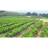 Organic Farming For Nutritious And Healthy Food Crops Production