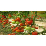 Training Course on Horticultural Production and Marketing